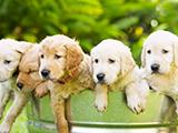 Eduquer son chien : à la découverte de l'école du chiot