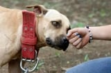 Morsures de chiens : le flou des statistiques