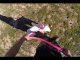 L'agressivité chez le Bull Terrier et conseils pour y remédier