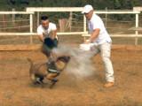 Bagarre de chien : comment séparer des chiens qui se bagarrent ?