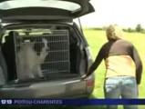 Un Tornjack pour former les facteurs au risque chien