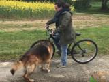 Comment se comporter si son chien court après les vélos ?