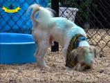 Que faire si votre chien devient agressif au contact de congénères ?