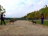 Calmer un chien agressif