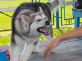 Morsures de chiens : causes et solutions