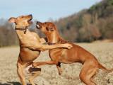 Les dessous de l'agressivité chez le chien