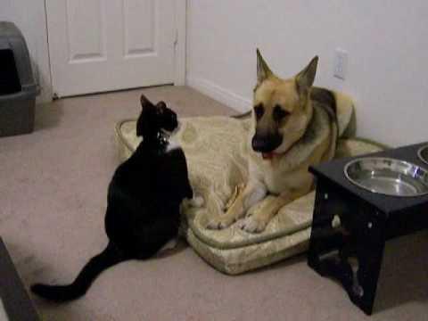 jeux de chat contre chien a la plage. Black Bedroom Furniture Sets. Home Design Ideas