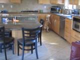 Que fait ce Beagle pendant mon absence ?