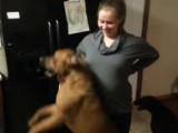 Un chien défend une femme enceinte