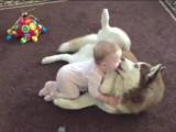 Un bébé joue avec un husky