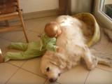 Bébé amoureux de son Golden Retriever