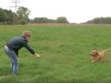 Un enfant et son Basset fauve de Bretagne se divertissent
