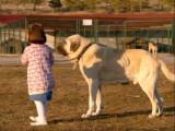 Le Kangal et les enfants