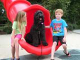 La cohabitation entre l'enfant et le chien