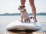 Le paddle, un sport amusant à pratiquer avec son chien