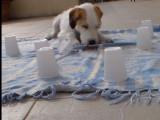 4 jeux de stimulation pour chien à faire soi même
