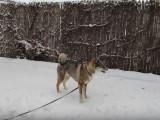 Jeu dans la neige pour ce Shikoku Ken