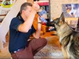 Interagir avec son chien en présence de jouets