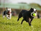 La ludopédagogie : éduquer son chien par le jeu