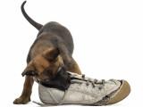Mordillements : mon chien mordille tout, que faire ?