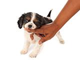 Pourquoi un chien mord-il?