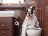 Mon chien mange ses excréments : raisons de la coprophagie et conseils pour la soigner