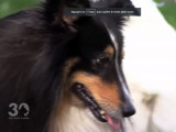 Que faire avec un chien anxieux