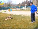 Comment réagir si votre chien court après tout ce qui bouge ?