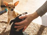 Chien jaloux : la jalousie chez le chien