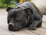 Problèmes de comportement du chien : les attitudes à éviter