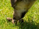 Mon chien est coprophage, que faire ?