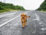 Chien fugueur : pourquoi mon chien fugue t-il, et que faire ?