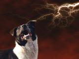 La peur de l'orage chez le chien