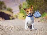 Mon chien fugue : quelles solutions ?
