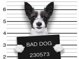 Chien qui vole : comment corriger le comportement d'un chien voleur ?