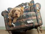 Bêtises et mauvais comportements : mon chien en fait-il exprès ?