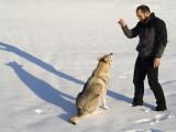 Psychologie et comportement : Comment bien comprendre son chien ?
