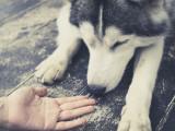 Que faire face à un chien inconnu ?
