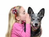 Les signaux d'apaisement, moyens de communication du chien