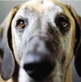 Avez-vous un chien pessimiste?