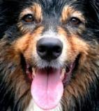 Le chien est physionomiste : il reconnaît le visage de son maître