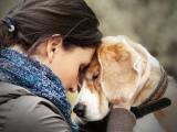 Et si les chiens lisaient dans nos pensées ?