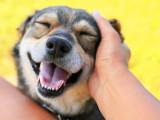 Savoir caresser son chien dans le sens du poil
