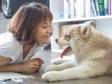 La communication entre le chien et l'Homme