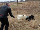 Savoir si un chien refuse ou accepte d'être touché et caressé