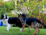 2 indications essentielles pour comprendre son chien