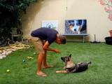 Communiquer avec son chien sans crier (3/4)