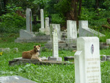 Le chien face au décès de son propriétaire