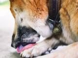 5 raisons pour lesquelles votre chien lèche beaucoup