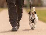 Promenade du chien : où, quand et comment promener son chien ?